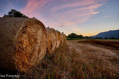 Vipava valley sunsets (SLO) (Uros P.hotography) Tags: awesome amazing beautiful breathtaking color excellent fantastic hiking incredible nice perfect stunning superb trip adventure unique view unforgettable extraordinary exceptional brilliant glorious striking aweinspiring stupendous urosphotography moody shadows travel tourism memorable remarkable tour journey light time passing sony a7ii mm 1635 fullframe nature sunset sky cloud forest tree path slovenija slovenia vipava valley vipavska dolina hay bale sunflower seno soncnice