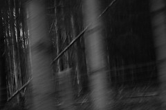 (jonathan.kilonda) Tags: leafs dark creapy anarchy chaos mobement move abstract forest woods