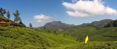 Tea Plantation (Zmeul Calator) Tags: tea hills india munnar green