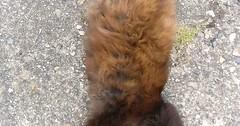 Waking up from her nap via http://ift.tt/29KELz0 (dozhub) Tags: cat kitty kitten cute funny aww adorable cats