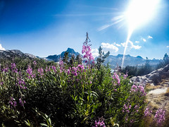 Ansel Adams Wilderness (Kayla Niksic) Tags: california anseladamswilderness thousadnislandslake lake bannerpeak pct fireweed wildflowers summer mountains