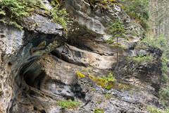 Johnston Canyon-1128.jpg (CraigG144) Tags: alberta banffnationalpark johnstoncanyon improvementdistrictno9 canada ca