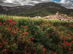 Vilanova de Mei, Amapolas (efe Marimon) Tags: canonpowershots120 felixmarimon catalunya lleida vilanovademei montsec amapolas