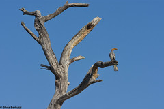 IMG_0448 (Silvia Bertuzzi) Tags: africa namibia etosha safari africanwildlife africanbird bananabird