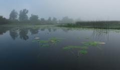 Cerknica Lake (happy.apple) Tags: otok cerknica slovenia si cerkniškojezero cerknicalake slovenija landscape morning fog summer megla jutro poletje geotagged