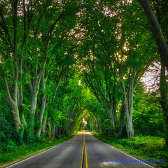 100 Days of Summer #75 - Oak Tunnel (elviskennedy) Tags: 100daysofsummer asphalt black branch canopy cedarburg county cover ditch doouble dscrx1rii elm elvis elviskennedy forest gray green grove hdr highdynamicrange highway hike horizon kennedy lane leaf leaves maple oak outside ozaukee path road roof roots route rural rx1 rx1r rx1rii rx1rm2 saukville scenic shade shadedpath sony spruce stripes summer trail travel tree trees trunk tunnel wi wisconsin woods wwwelviskennedycom yellow