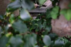 Shigitatsuan (HAMACHI!) Tags: oiso kanagawa 2016 japan summer autumn sea   shigitatsuan