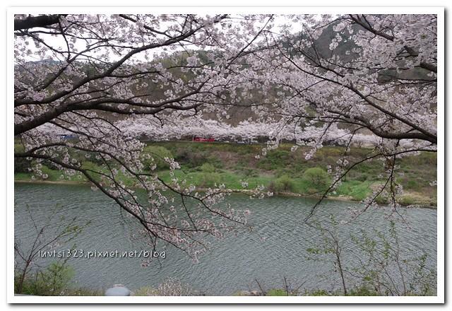 화개십리벚꽃길03