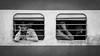 ☐☐ (Thomas Leuthard) Tags: street leica white black photography flickr fuji thomas streetphotography olympus monochrom omd hcb leuthard thomasleuthard