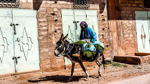 old woman carrying weed on a donkey
