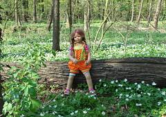 Anne Moni allein im Buschwindrschenwald ... (Kindergartenkinder) Tags: dolls blume wald annette buschwindrschen wittringen himstedt annemoni kindergartenkinder