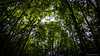 _DSC5479 (kirok31) Tags: trees macedonia greenleafs dojran