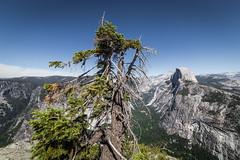 half dome (wein2040) Tags: usa outdoor halfdome yosemitenationalpark landschaft baum kalifornien hügel usasouthwest