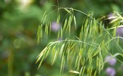 grasses bokeh (Dotsy McCurly) Tags: side road grasses flowers wild plants nature beautiful nikon d750 dof bokeh nj