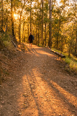 Mt Coot-tha track - into the light (NettyA) Tags: 2016 australia brisbane mtcoottha mtcootthalookout qld queensland sonya7r clouds seqld sunrise shadows warm light bushwalking bushwalk trees eucalypts person man walking track trail path forest peopleandpaths