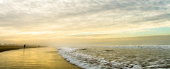 Moody gold.. (carogray1) Tags: golden panoramic dreamy seascape santa monica beach tranquility landscape goldentones light soft pastelcolors softpastelhues rushingwater sand atmospheric santamonicabeachscene