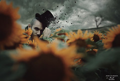 Jesse. (Megan Glc Photographe) Tags: man flowers sunflowers champs garden spring storm thunderstorm clouds tree hat mad hatter tophat ashes photoshop photomanipulation manipulation editing tales fairytales dust particles magical surreal fantasy portrait