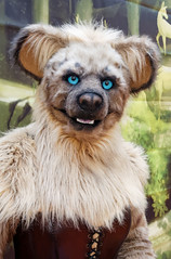 Eurofurence 2015 (Deeragon Entertainment) Tags: furry hyena fursuit 2015 kitana eurofurence fursuiter fursuiting ef21