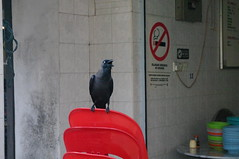 Bird, George Town, Malaysia (ARNAUD_Z_VOYAGE) Tags: world street city building heritage cars landscape island town george site asia action south capital unesco east national malaysia metropolis penang federal metropolitan territory