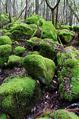 20160712-05-Mossy boulders in Wellington Park (Roger T Wong) Tags: 2016 austraia cathedralrock rogertwong sel2470z sony2470 sonya7ii sonyalpha7ii sonyfe2470mmf4zaosscarlzeissvariotessart sonyilce7m2 tasmania wellingtonpark bushwalk green hike moss outdoors rocks tramp trek walk
