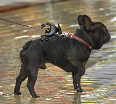 The Fearsome Twosome (swong95765) Tags: dog water dragon fierce magic canine leash unbelievable