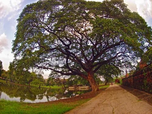 The Tree (II)
