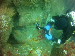 18 July 2016 - Scillies Trip PICT0184 (severnsidesubaqua) Tags: scillies scilly scuba diving