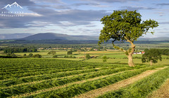 A View Of Criffel (.Brian Kerr Photography.) Tags: criffel dumfriesandgalloway scotland tree landscapephotography sonyuk a7rii photography outdoorphotography briankerrphotography briankerrphoto crops views