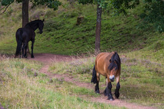 Horses (Infomastern) Tags: alunbruket animal djur horse hst exif:focallength=150mm geocountry camera:make=canon geocity camera:model=canoneos760d exif:isospeed=320 geostate geolocation exif:lens=efs18200mmf3556is exif:model=canoneos760d exif:aperture=56 exif:make=canon