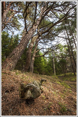20160821. Hiiumaa. Kaleste. Pine forest. 9013 (Tiina Gill (busy)) Tags: estonia hiiumaa kaleste summer outdoor pine tree forest nature