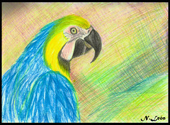 Loro ( Niels Len  Ilustracin - sketch/Portafol) Tags: draw drawing colores color dibujo chile santiago art arte acuarela watercolor acrlico ilustration ilustracion work urban urbano city ciudad animales animals