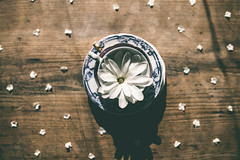 (CarolienCadoni..) Tags: sonyslta99 sal2470z cup dof bokeh flower flowers still stilllife letsbestill light sun shadow