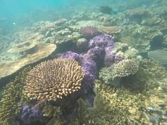Snorkel dans les Whitesundays
