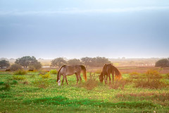 IMG_3404.jpg (Melinda Ledsome) Tags: ranch horses horse southwest nature field sanantonio rural america fence landscape outside countryside spring oak cowboy texas natural folk farm live wildlife country hill scenic pasture hillcountry picturesque springflowers equine texan springtime countrylife medow fenceline texashillcountry countyroads springtimeflowers texasphoto texaslandscapephotography texasnaturephotographer texastravelphotography texasimages texasnaturephotography texaslandscapephotos texaslandscapeimage texaslandscapephotographer texaslandscapepicture texasnatureimage texasnaturephoto texasnatureprints texasnaturestockimage texasnaturestockphoto texasnaturestockphotography texasnaturestockpicture texaspicture texasscenicimage texasscenicphoto texasscenicphotography texasscenicpicture texasscenicprints texasscenicstockimage texasscenicstockphoto texasscenicstockphotography texasscenicstockpicture texastravelimage texastravelphoto texastravelpicture texastravelprints texastravelstockimage texastravelstockphoto texastravelstockphotography texastravelstockpicture