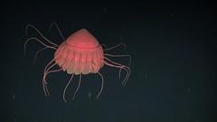 EUO © OCEANA  55956 (Oceana Europe) Tags: spain esp oceana seamounts rangerexpedition2014 expeditionranger2014 montañassubmarinas