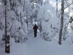 Son (bgoodtrek) Tags: winter ski skiing snow son trees glades snowy skier treeskiing powder white wonderland cold