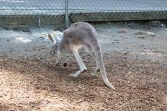 IMG_1947 (jmac33208) Tags: new york animal animals zoo land mills adirondack vails