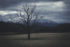 Spooktree (Raptorfairy) Tags: winter spooky tree trees forest field fields woods dark gloomy eeire horror ghost halloween sky mountains landscape tn canon canonrebel t3i