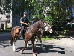 Westend Mounted Police (Sherwood411) Tags: horses vancouver police mounted westend sherwood411