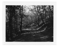 On the way (Andrey Timofeev) Tags: road camera trees bw sun white black mountains mamiya film nature monochrome grass analog forest dark landscape polaroid blackwhite back mood view branches deep atmosphere rangefinder 100mm iso pack land instant fujifilm rays universal analogue 3000 crimea thicket expiredfilm f35            mamiyasekor fp3000b           14may2015 usebefore201412