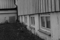 IMG_8390 (Siw Linda) Tags: summer nature outdoors grainy building grain school old windows tree dark moody