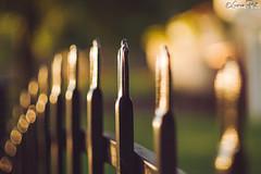 _DSC1612 (goran_protic) Tags: naturallight fence light pancolar zeiss carl 50mm czj