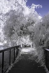 Ladywell Fields (blackwoodse6) Tags: park uk blue england white london ir outdoors nikon bluesky infrared foilage southlondon falsecolour londonpark southeastlondon 720nm ladywellfields nikond300