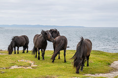 Horses with Sea view (Infomastern) Tags: hallandsvder vdern animal djur horse hst exif:model=canoneos760d exif:aperture=71 geocountry camera:make=canon exif:isospeed=100 camera:model=canoneos760d geostate geolocation exif:lens=efs18200mmf3556is geocity exif:focallength=50mm exif:make=canon freedom frihet