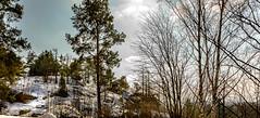 Pihlajamki (Jori Samonen) Tags: trees sky snow clouds finland helsinki hill pihlajamki