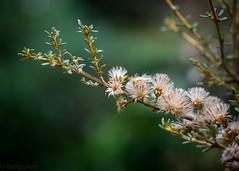 Day 212 (hmxhm) Tags: aotearoa nature newzealand olympus wellington zealandia
