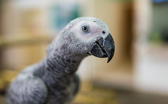 ZON_9884 (Zonnie) Tags: nikon d600 sigma 35 f14 sb700 dof bokeh closeup parrtos birds wildlife animals
