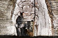 Cottage 2016-07-28 011 (Roger's Eye <(r)>) Tags: macro 100mm highlandseast ontario canada ca