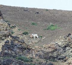 Trip to Alaska. Denali National Park and Preserve. Jul/2016 (EBoechat) Tags: trip alaska denali national park preserve jul2016 bear urso alasca parque nacional logo preto black wolf