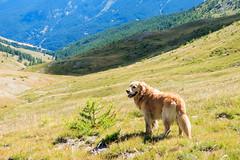 IMG_6663 (rickyrebora) Tags: col basset sauze doulx sestriere summer mountain montagna prati